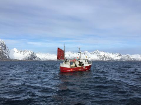 Bateau de pêche au cabillaud Skrei dans les Lofoten