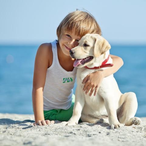 Barmenia bringt Operationskostenversicherung für Hunde