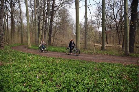 Fahrradtour - Bärlauch
