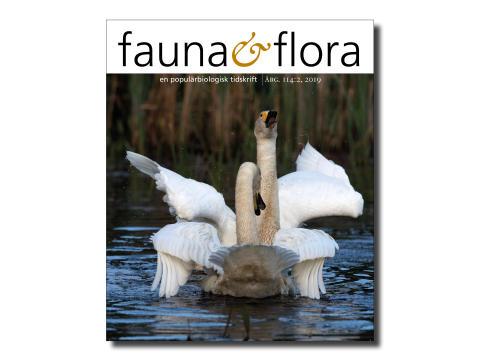 omslagfaunaochflora-nr2-2019