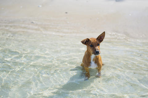 Hit drömmer hunden om att få resa
