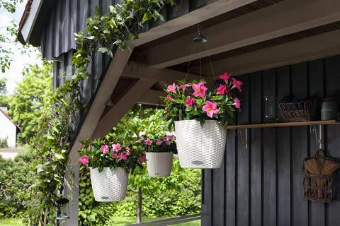 LECHUZA NIDO Cottage bepflanzt mit Dipladenia