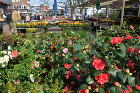 Ein buntes Blumenmeer erwartet die Gäste