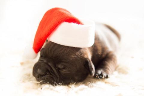 Åtta av tio ger hunden julklapp