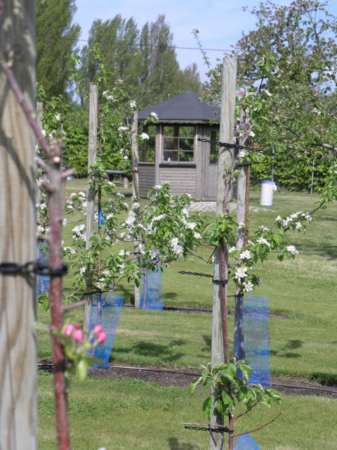 Trädgårdarna på Kiviks Musteri öppnar