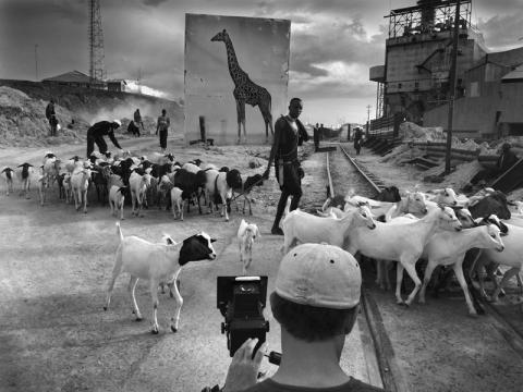 Giraffe & Goats, behind the photos from Inherit the Dust by Nick Brandt