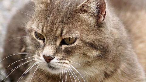Kattförsäkring – trygghet till din äldre vän