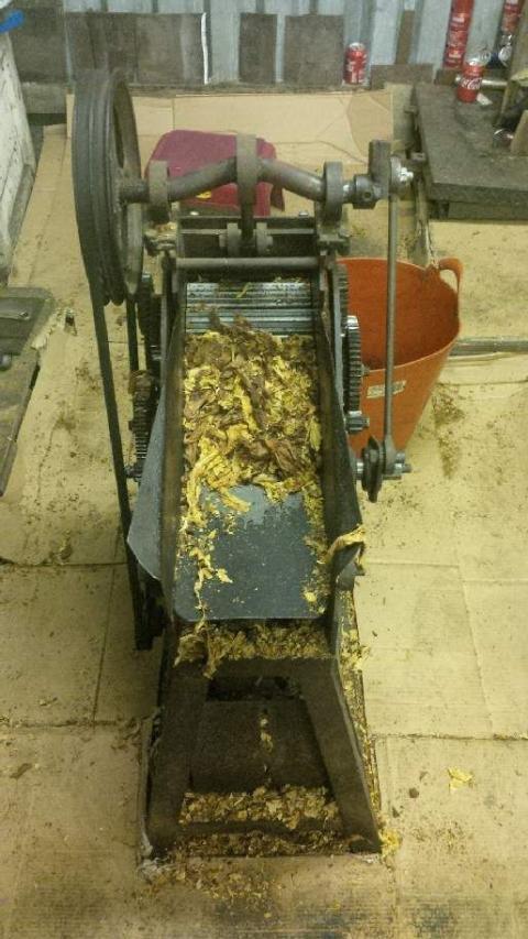 Op Ostrich inside tobacco factory 3