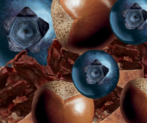 Ingredienskollage blåbär, kakao + shianötter