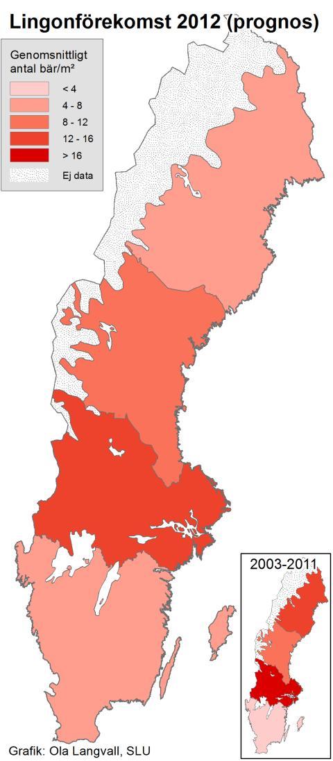 Ojämn tillgång på lingon i år (karta)