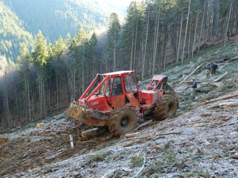 Framtidsland för skogsbruk