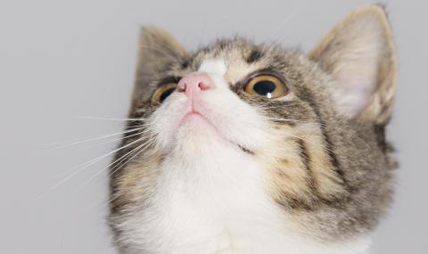 Kattunge som tittar upp