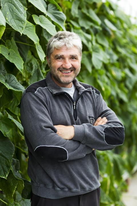 Lottentorp skördar gurka från mars till oktober!