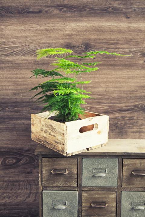 10 trendiga krukväxter