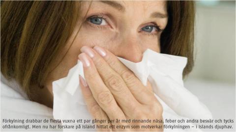 Djuphavsenzym motverkar förkylning (Artikel: Tidningen Kurera, #4 2011)