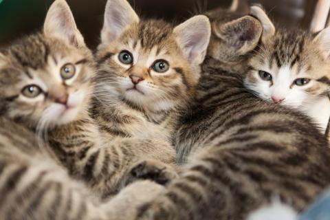 Kattkörkort ska minska antalet hemlösa katter