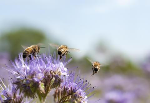 Växande intresse för hållbar, klimatsmart och bivänlig trädgård