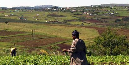 Teknikoptimism ledde fel i sydafrikansk satsning på småbrukare