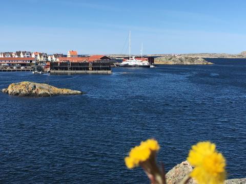 Nu kommer äntligen våren till Bohuslän!