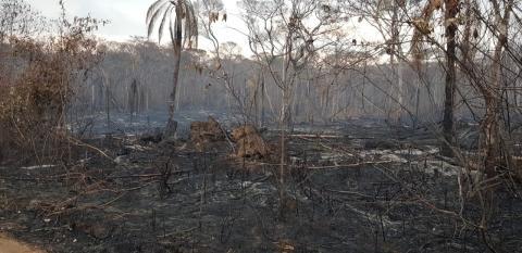 Bolivias skove står i flammer: 800.000 hektar brændt af