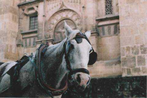 Press Trip Equestrian Tourism International Trade Fair 15-18 October