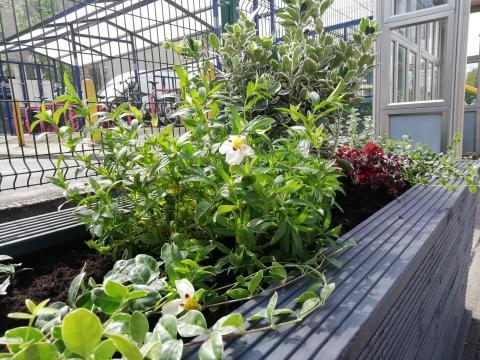 Royston station gardening