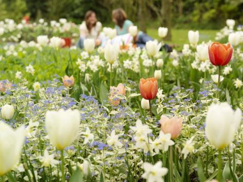 Starta våren när det är höst