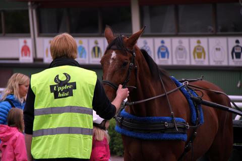 Upplev Häst på Täby Galopp