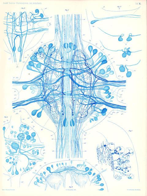 Det centrala nervsystemet, Gustaf Retzius (1842-1919)