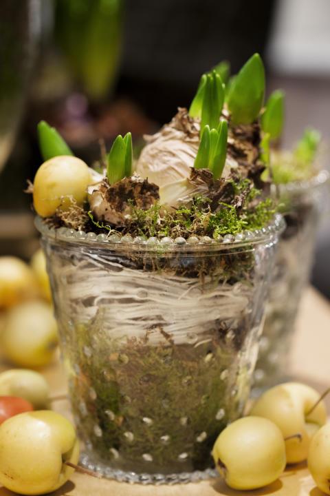 Multiflorahyacint och gula prydnadsäpplen