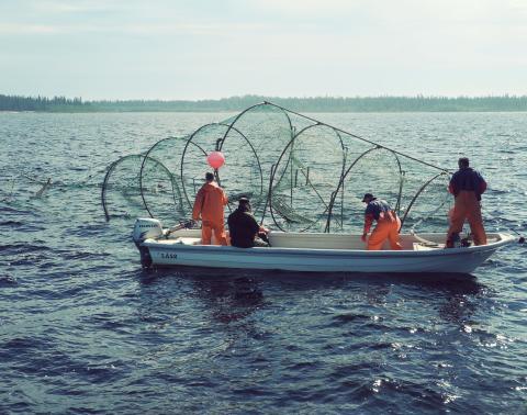 HaV ger 3,7 miljoner till redskap som skyddar fisken från sälskador