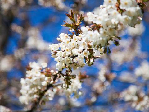 Våren hälsas välkommen!