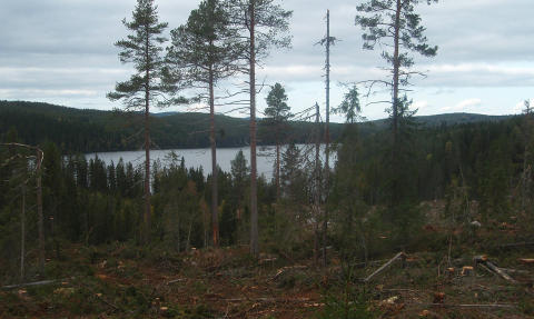 Seminar 22 June: Forests, Bioenergy and the Global Climate