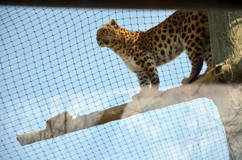 Einweihung Leoparden-Tal