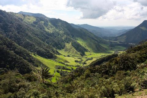 Valle de Cocora, naturresa Colombia
