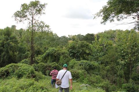Life Forestry klärt Irrtümer auf