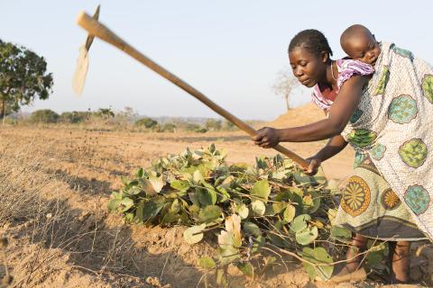 Småbønder vinder på landbrugsinvesteringer i udviklingslande