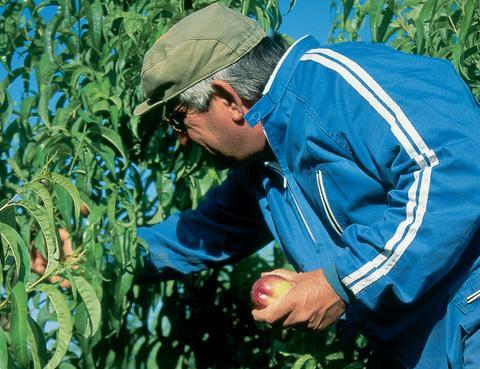 Frugtturisme, udflugter til frugtgårde