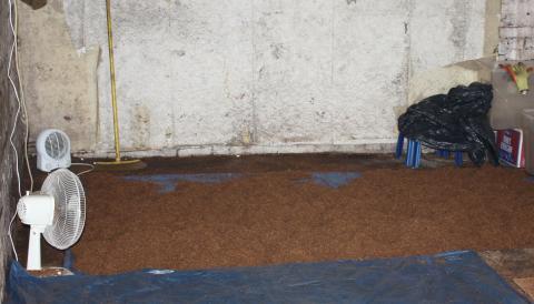 Tobacco on floor at farm in Leighton buzzard