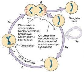 Global Cell Cycle Analysis Industry Market Research Report 2017
