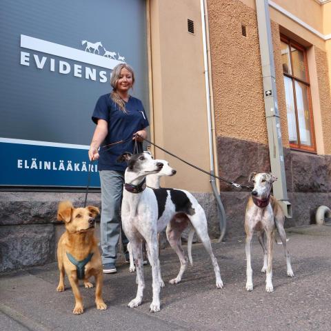 Rescuekoirat Rubert, Goku, Gauri ja Yune valmiina eläinlääkäri Tanja Hakkaraisen vastaanotolle Evidensia Karhupuistossa.