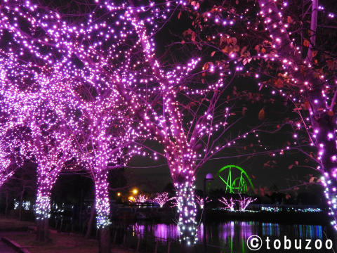 Tobu Zoo Winter Illumination 2016-2017(1)