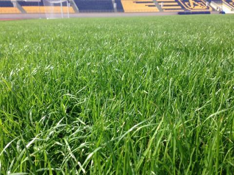 Hybridgräset växer fram på Kristianstad Arena