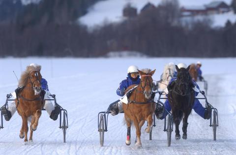 Barn och ungdomar möter hästar på Istravet i Åre den 1 mars