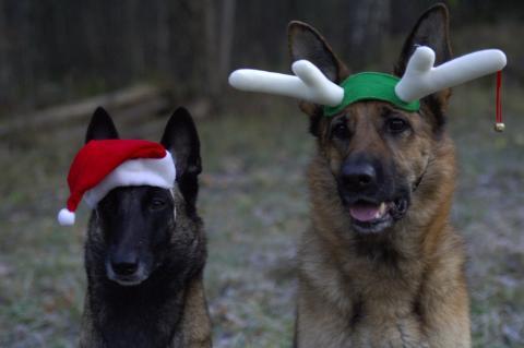 Julens faror för din katt och hund