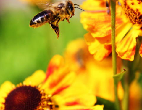 Aktion rädda bin och andra insekter i Norrland!