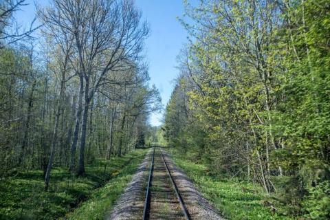 Sveriges vackraste tågresa bild 8  - Skogsbild variant 2