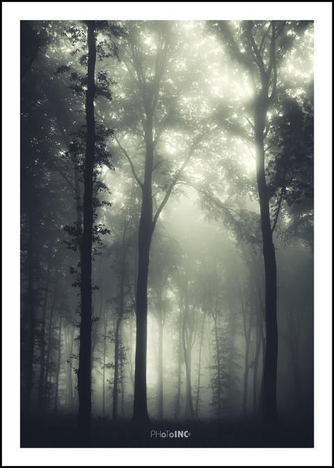 Forest tavla