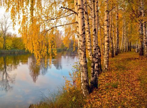 autumn-1040606_1920