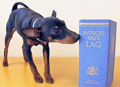 Hundanpassad konsumentköplag kan bli verklighet